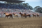 California Rodeo Salinas' Livestock Program